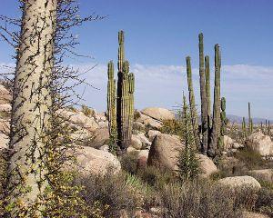 Desert landscape [image credit: Wikipedia]