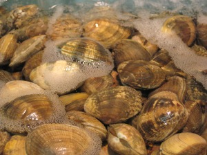 Clams [credit: Wikipedia]