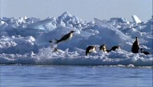 Emperor penguins, Antarctica [image credit: USAF / Wikipedia]