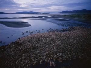 Cape Pierce, Alaska -- 2010