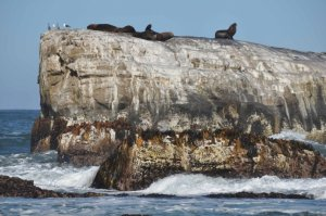 Sea lions get a lift in Chile [credit: M.Moreno/GFZ]