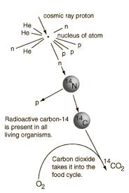 Radiocarbon dating prijzen