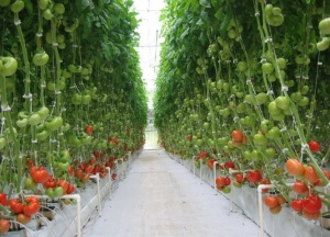 Greenhouse effect [image credit: hortibiz.com]