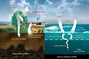 Carbon cycle [image credit: NASA Earth Observatory]