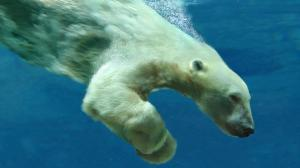 Dive! [image credit: BBC]