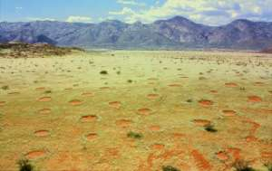Fairy circles in Namibia's Marienfluss valley  [image credit: Thorsten Becker]