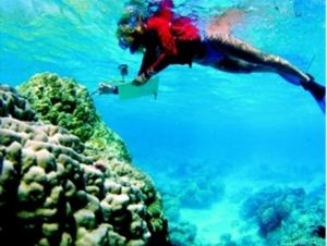 Australian coral [image credit: heraldsun.com.au]
