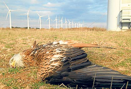 Red-kite-turbine