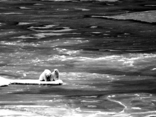 polar_thin_ice Jessica Robertson_USGS