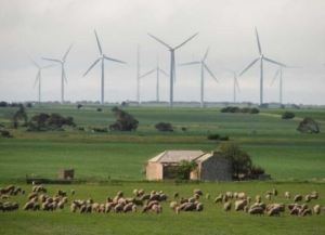 Wind farm in South Australia [image credit: reneweconomy.com.au]