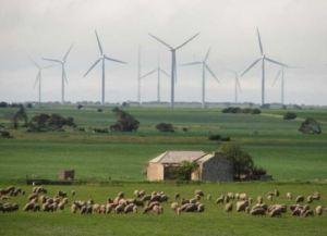 Wind farm in South Australia [image credit: reneweconomy.com.au]