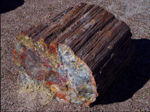 Petrified log at Petrified Forest National Park, AZ [image credit: Jon Sullivan / Wikipedia]